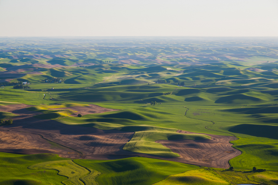 Palouse wheat fields in the spring as seen looking south from Steptoe Butte