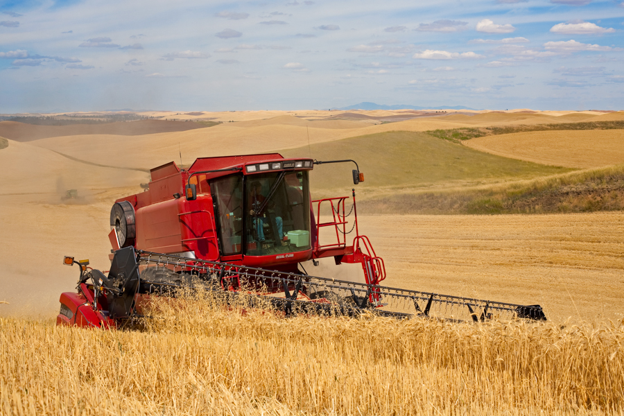 Harvesting wheat with a self-leveling combine, near St. John