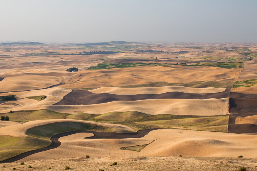 Different shades of brown represent different crops, land that is fallow or uncultivated, as seen from Steptoe Butte in August